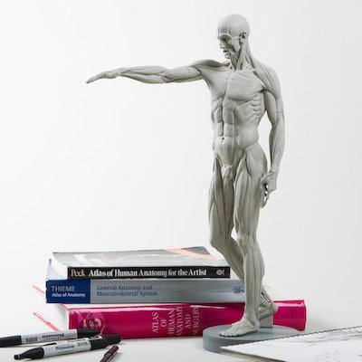 Anatomy figurine Poll | Drop (formerly Massdrop)