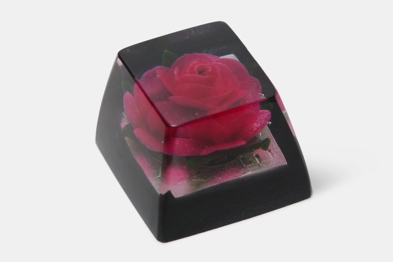 OEM - RosaAunt Margy (Pink Rose / Black)