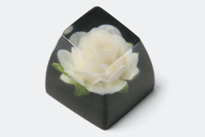 SA row 1 –Rosa Alba (White Rose / Black)