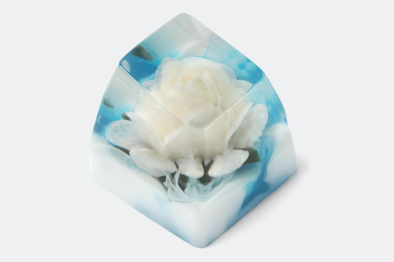 SA row 1 –Rosa Alba (White Rose / Heaven)