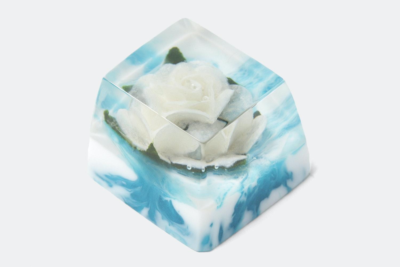OEM –Rosa Alba (White Rose / Heaven)