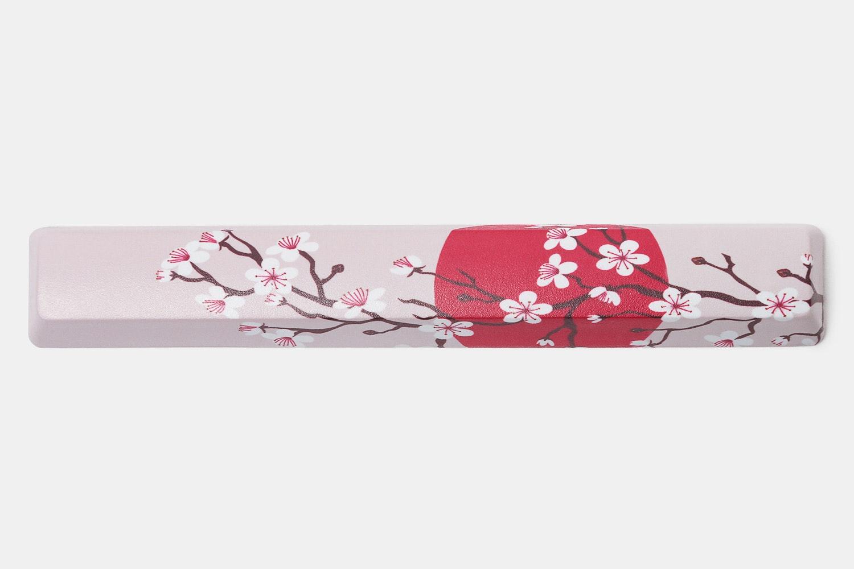 Sun & Cherry Blossom