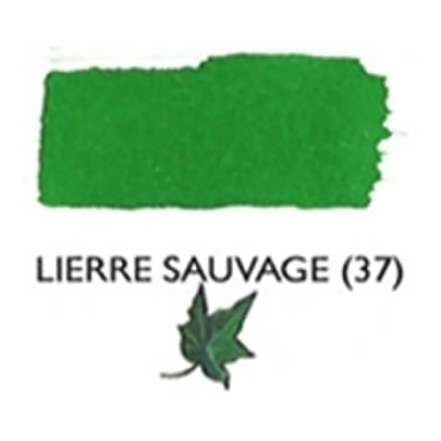 Lierre Sauvage